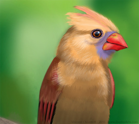 Bird Practice Illustration
