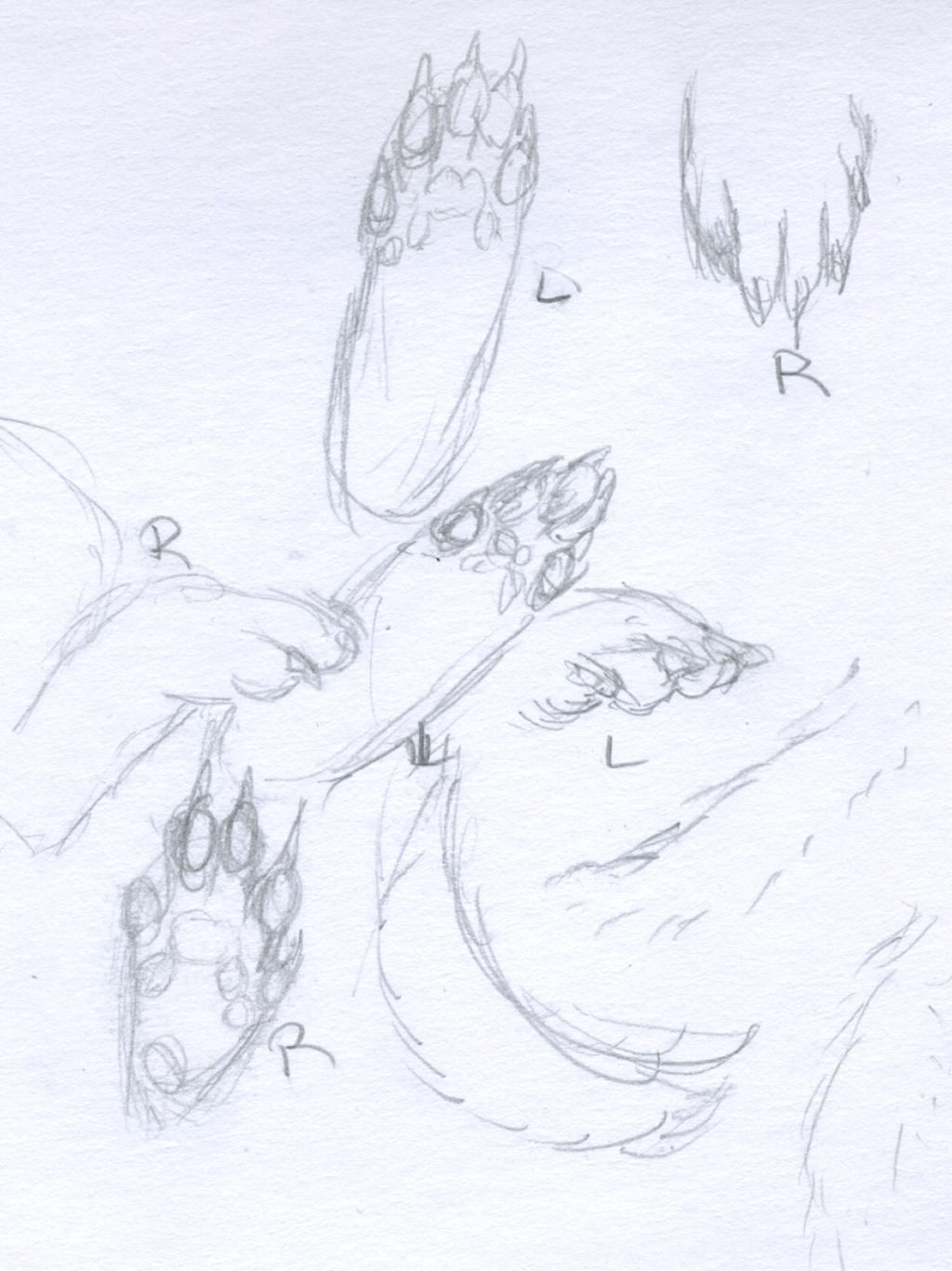 Ferret paws