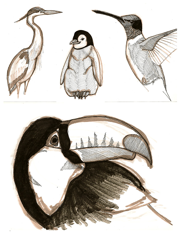 Homework - 4 birds