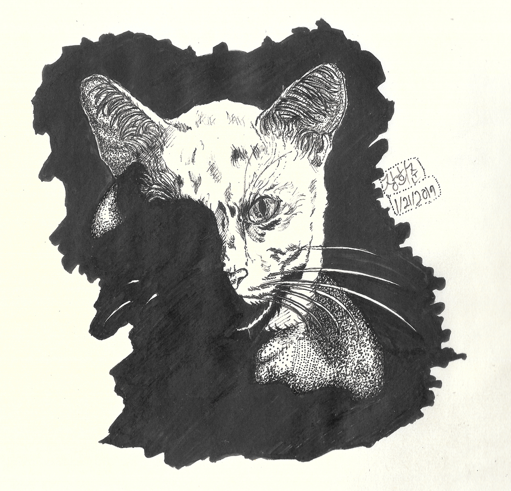 Most recent image: Cat-to