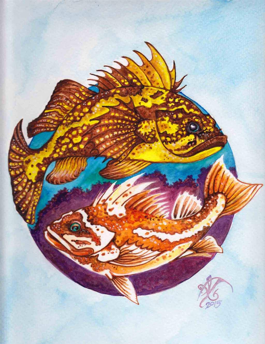 China Rockfish, Copper Rockfish