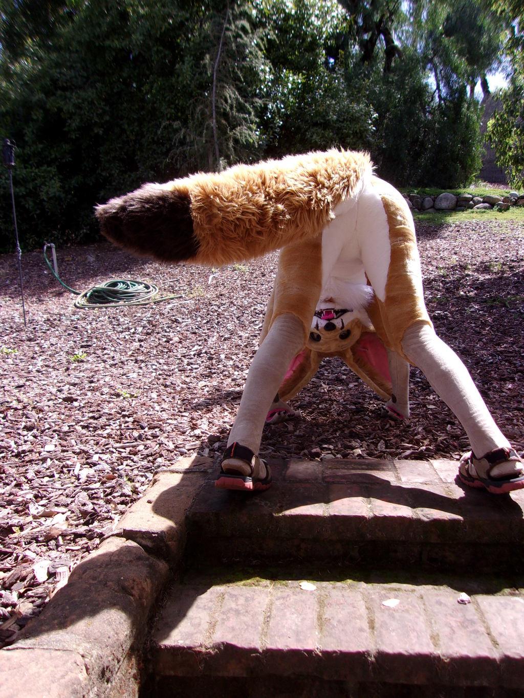Fennick swinging his tail.