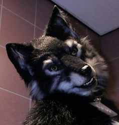 What? Can't a werewolf be clean?
