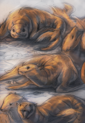 .Seal Sketchpage.