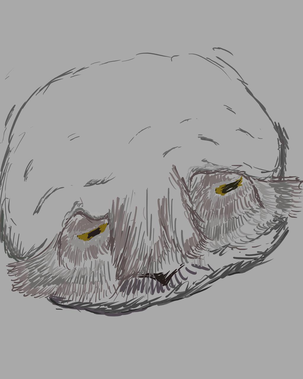 An Owl Face