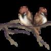 avatar of doee