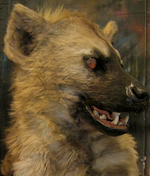 spotted hyena mask