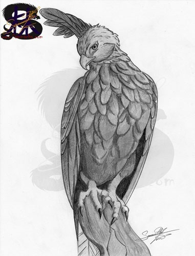 The changeable hawk eagle - pencil art