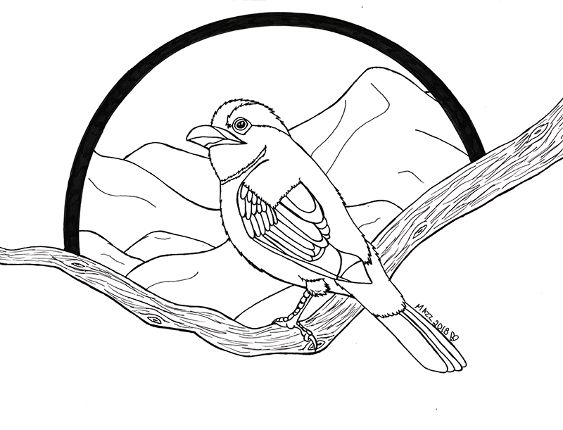 Silver Breasted Broadbill -inkwork-