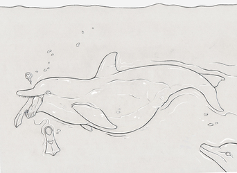 The fattest dolphin