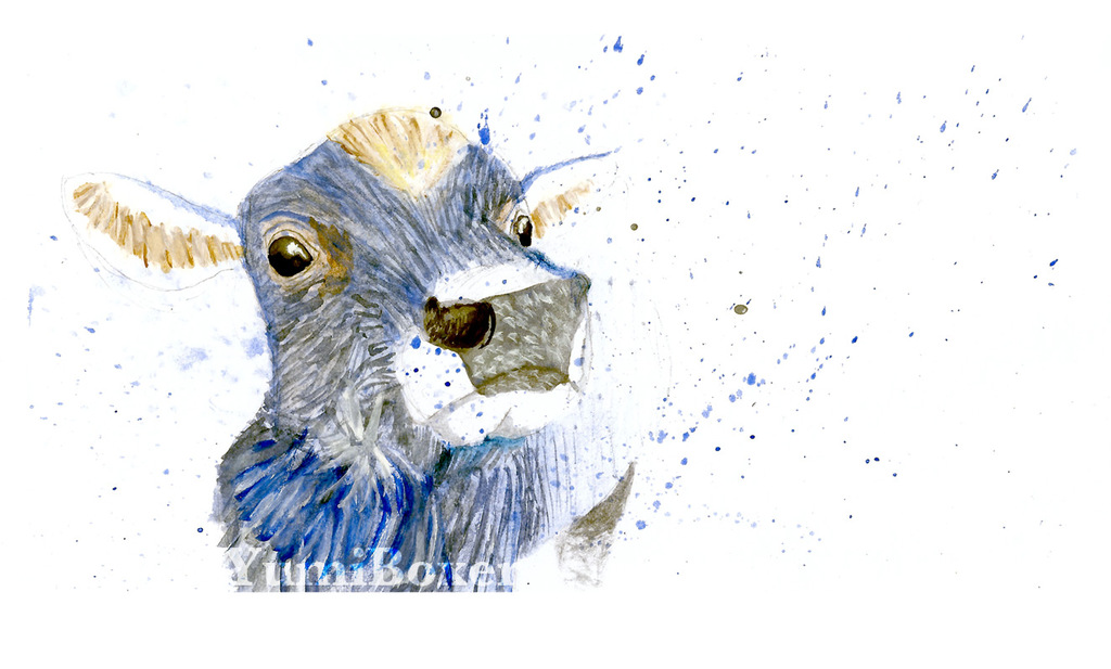Most recent image: Watercolour: Cow
