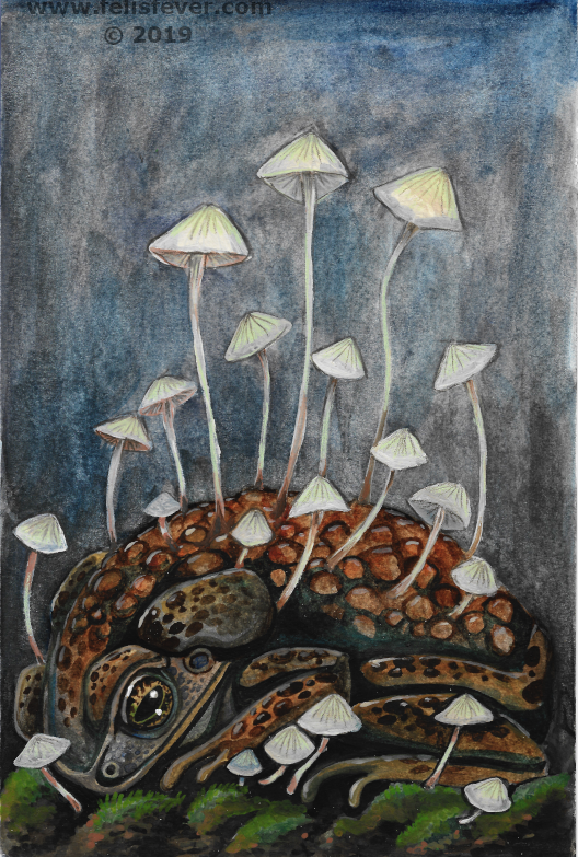 Watercolor test - Fungi Toad