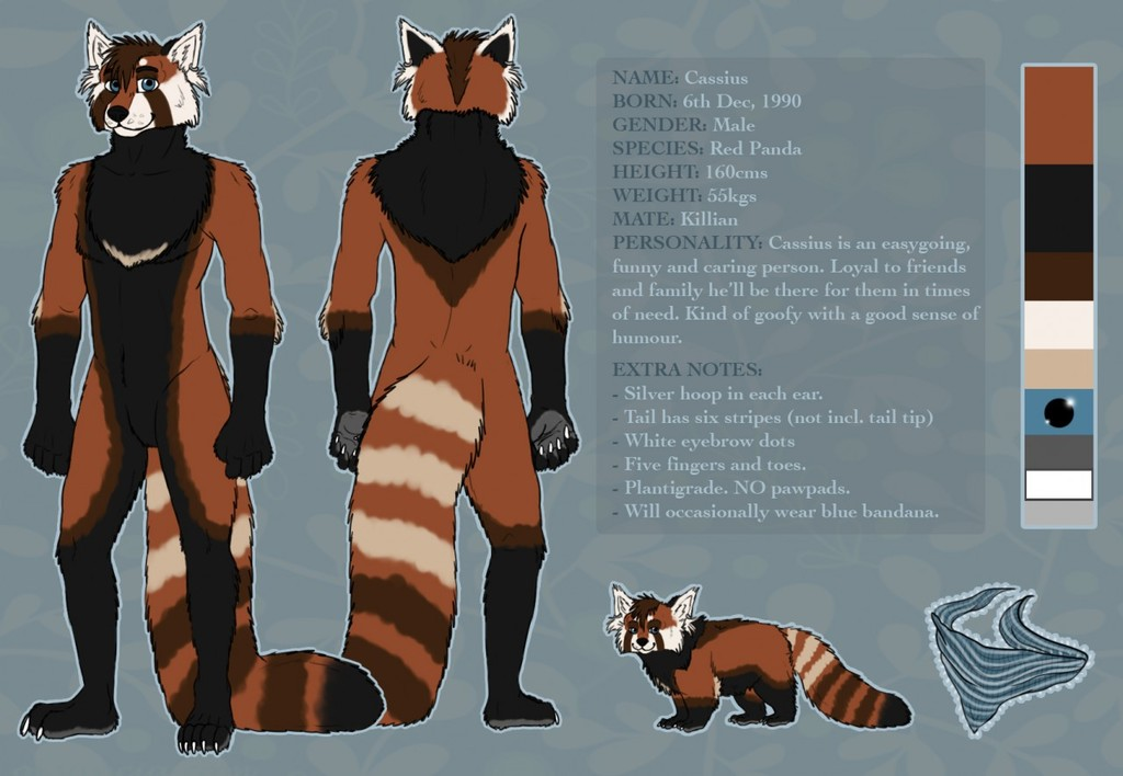 Cassius the Red Panda Reference Sheet
