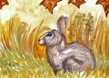 ACEO--Eastern Cottontail
