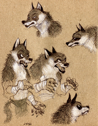 Angry angry wolves