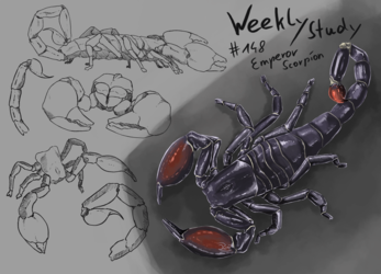 WeeklyStudies #148 Emperor Scorpion