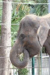 Elephant Noms