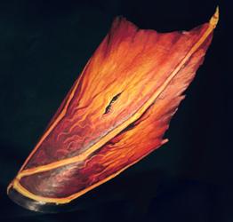 Dragon wing leather bracelet