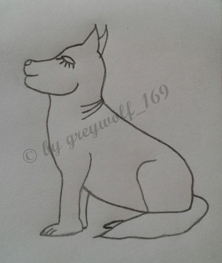 sitting dog, unshaded