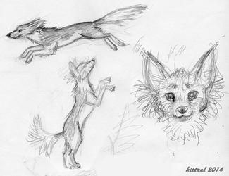 Rudy Sketches