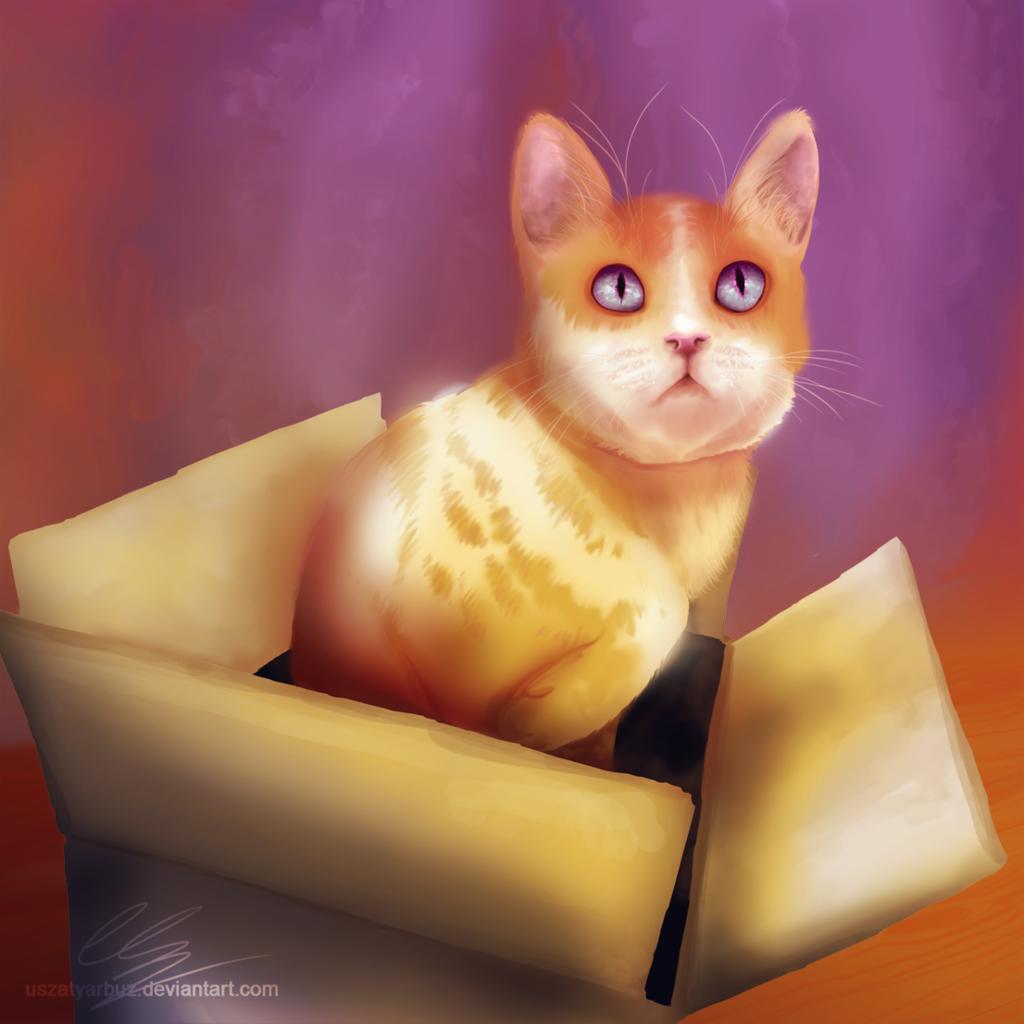 Orange in a box