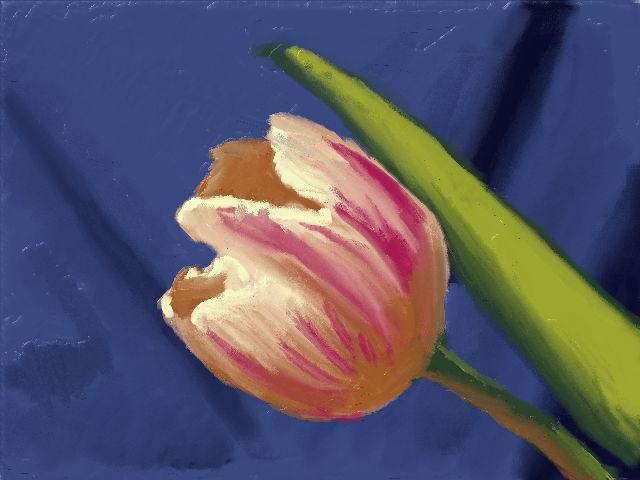 Tulip on Blue