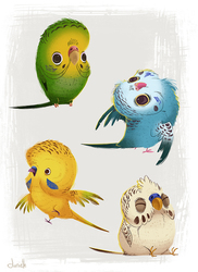 Silly Parakeets