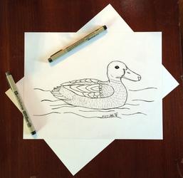Draw a Bird Day 2016