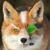 avatar of VerK