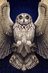 Strigiformes: Short Eared Owl