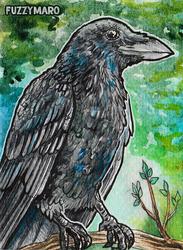Crow-ATC (ACEO)