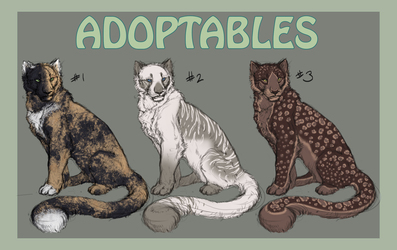 [Adopt-Auction] - Feral Cats