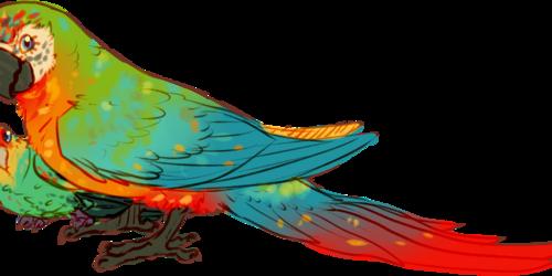 [P/G] Rainbow birbs