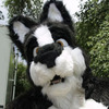 avatar of Nicona Shadowwolf
