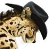 avatar of Swish