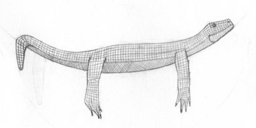 Lizard Hammock