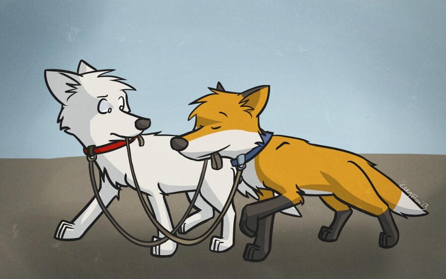 Walking a fox