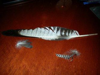 Birds feathers :3