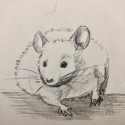 Mouse from reference.