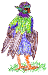 Starling Harpy