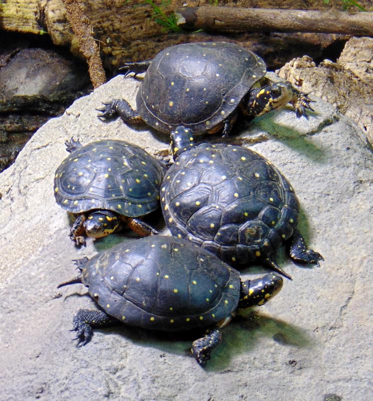 Oakland Zoo turtles