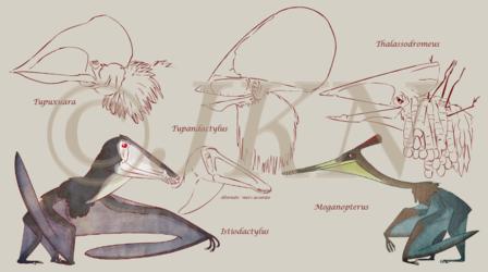 Pterosaurs sketches