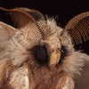 avatar of mothy