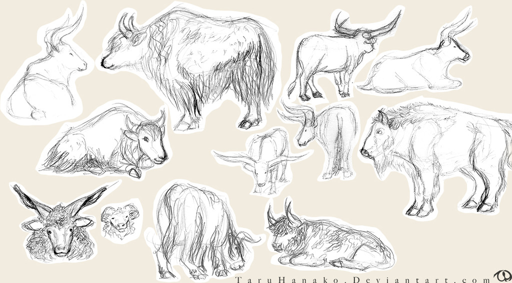 Zoo sketches - cattle and sheep