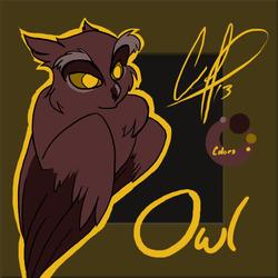 Owl - Tablet Practice