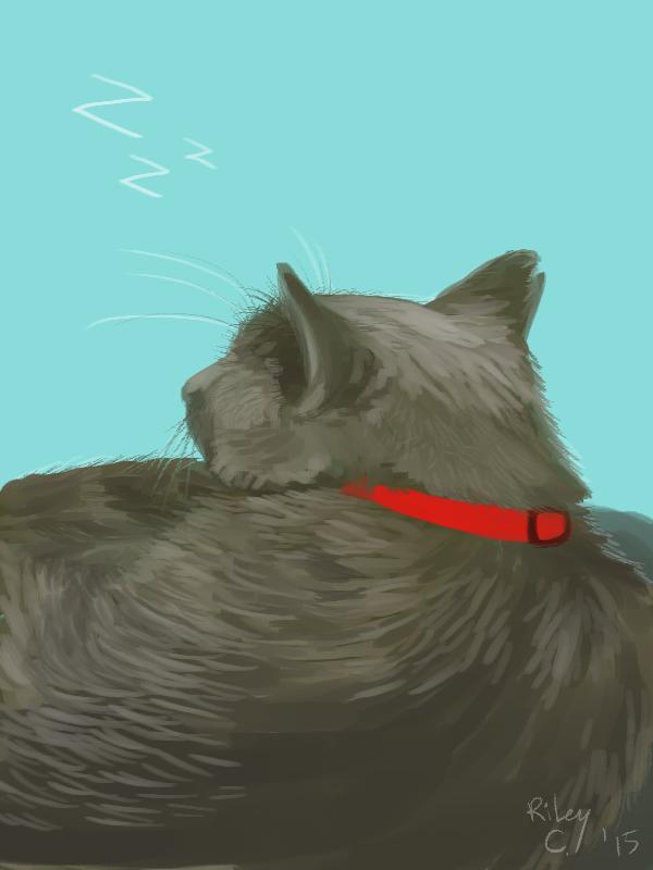 Most recent image: [sleeping cat]
