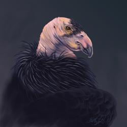 Condor Portrait