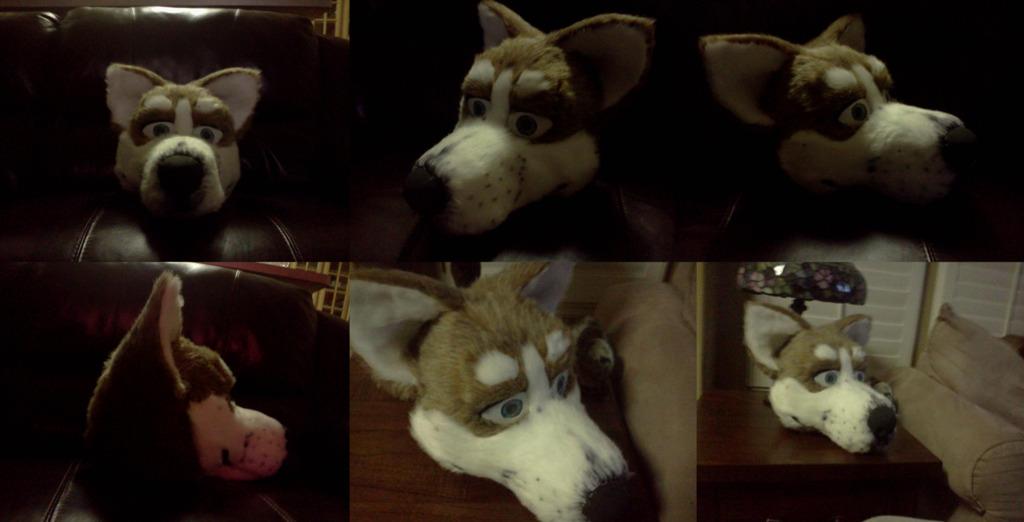 Red husky head