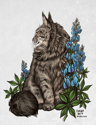Bailey and Bluebonnets
