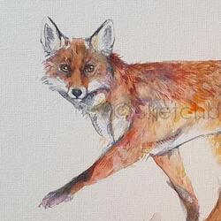 Running Fox Study